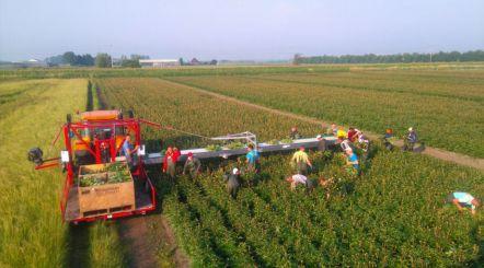 Pioen oogstband